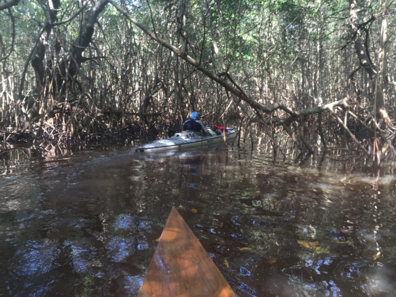 Bil Whale, with his mast down and outriggers stowed, leads the way through a passage choked with mangroves.