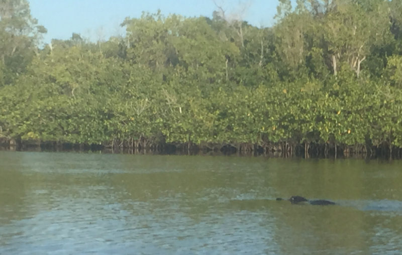 There is a reason that the WaterTribe awards a gator tooth to racers who traverse entire Everglades Wilderness Waterway.