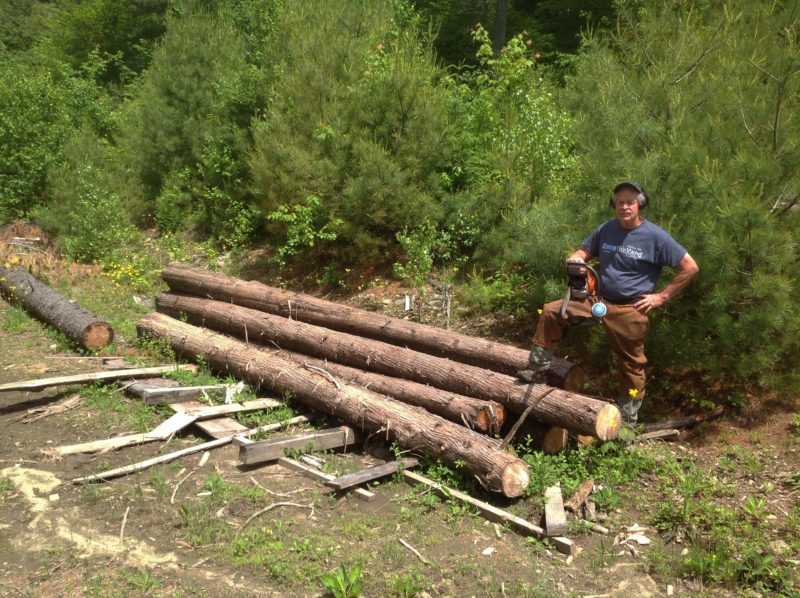 Landowner Bill Manning with northern white cedar (Thuja occidentalis) harvested for the planking. These 12' logs will be milled and planed, then scarfed to attain adequate length for the planks.
