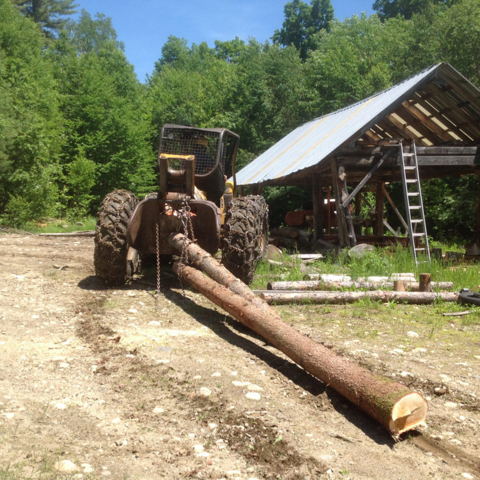 Bill Manning skids tamarack logs to his portable sawmill site, in preparation for milling into lumber.