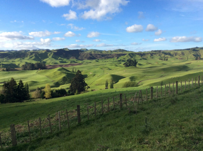 The pasturelands of New Zealand were almost painfully green. Armies of sheep kept it as well manicured as a golf course.