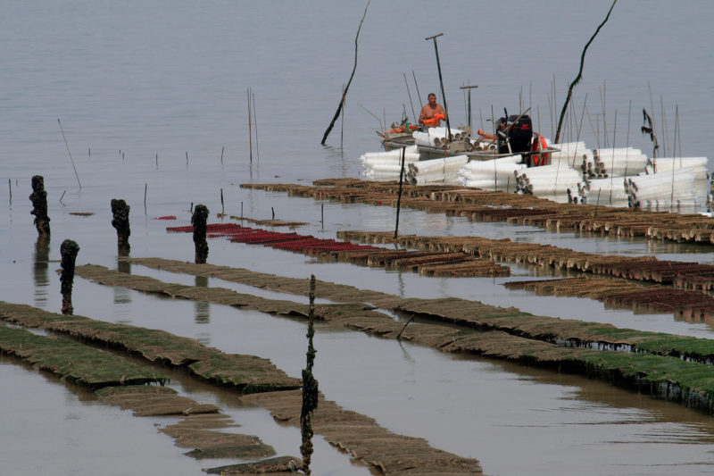 Charente Maritime waters are the most important place in Europe for oyster and mussel farming.