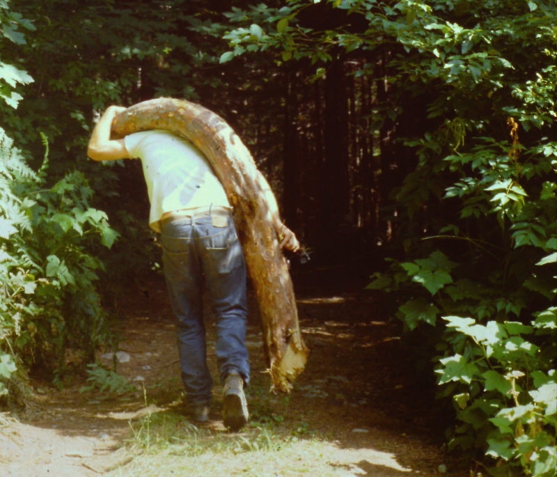 The mountain slopes produce curved trunks in areas prone to avalanches. This Alaskan yellow cedar trunk became curved deck beams for replicas of Aleut and Greenland kayaks.