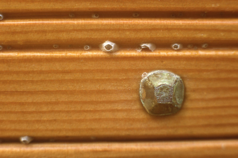 I was surprised to see that barnacles had found homes in the decorative grooves on the plank edges.