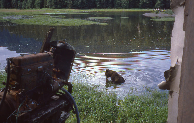 Lucy, the bear who had poked her head in while we were visiting Stan, took a dip in the rising water's by the cabin. She may be looking for salmon.