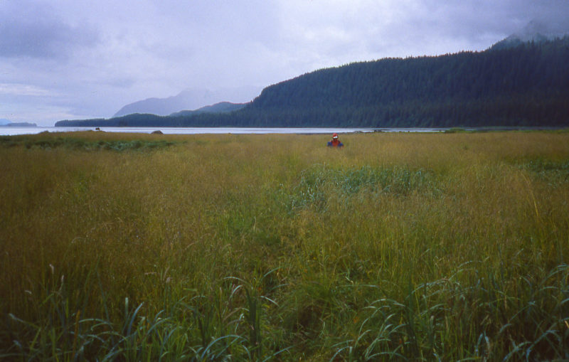 The direct path from the boat to the railhead was through shoulder-high grass, and we feared we might startle a bear hidden there.