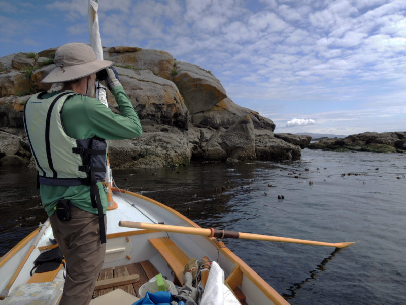 Traveling by a shallow-draft boat let me get in among the kelp and massive rocks to watch intertidal life and seabirds. I made a temporary anchor by wrapping the painter around a few thick stalks of kelp.