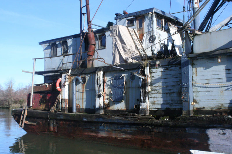 This old commercial fishing boat anchored in the middle of the slough appeared to be abandoned, but as I passed by I heard a generator throbbing deep with the hull and saw a lightbulb glowing in a window. Bearing the name MIDAS on its bow, it seems to have lost its golden touch.