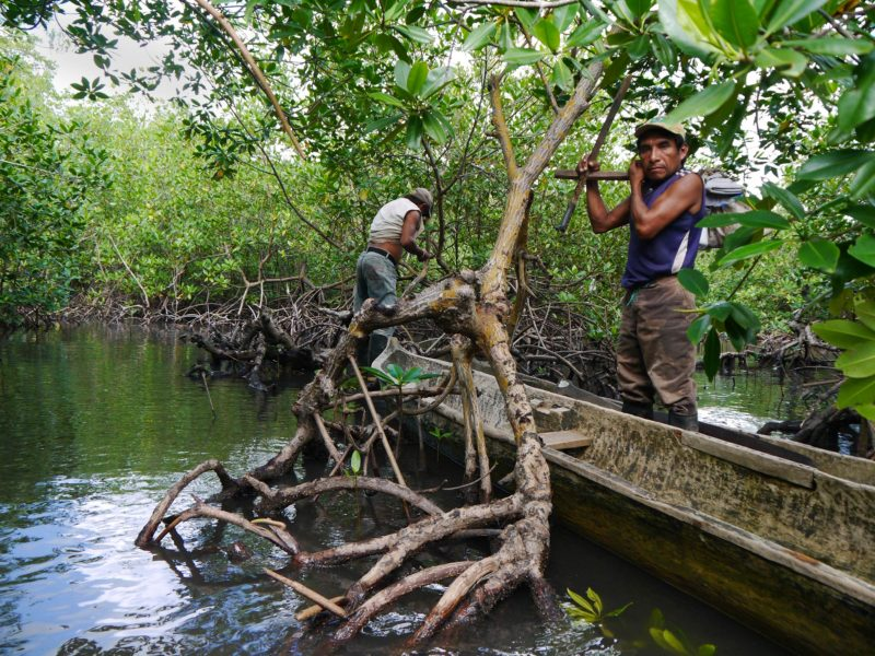 Joselino (foreground) and Justino secured their ulus to the roots of the mangroves and were ready to step ashore and walk through mud and forest trails to the building site of Joselino's ulu.