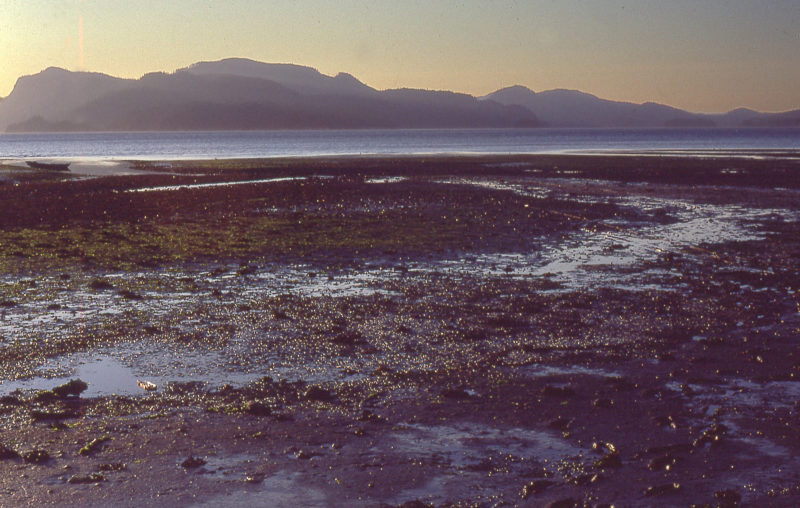 Having slept through my alarm, I was stranded on the tide flats. Ive dragged GAMINE to the water's edge and she rests at the far left. I'm standing where I was stranded, gathering gear to shuttle across the mud until it was all back aboard.